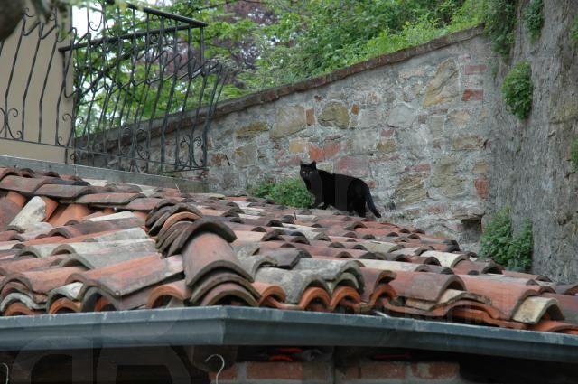 Mačka na streche - ...a pod strechou kliešte