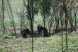 Austrálske klokany - na Slovensku v Modrovej pri Piešťanoch