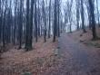 Lesná cesta v Marianke