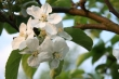Prišla jar - ovocné stromy