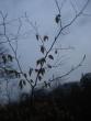 Zimná príroda v Marianke - troška upršané opačasie,ale aspoň nefúkalo
